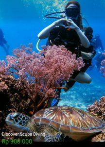 Kursus Diving DSD