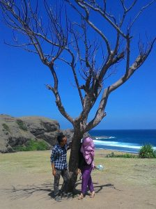 Pohon yang sudah tiada