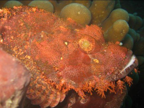 ikan karang