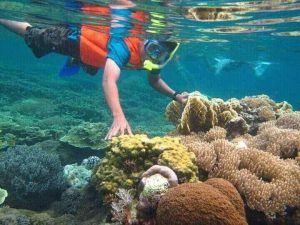 Trip Snorkeling Trawangan