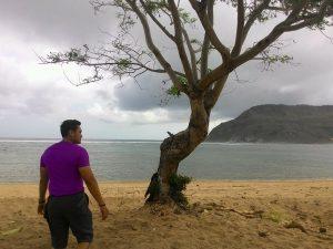 pohon di Areguling