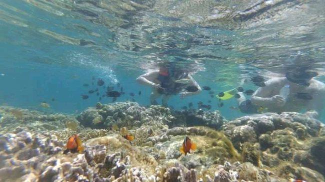 Snorkeling Gili Rengit dan Gili Layar
