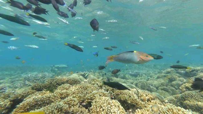 Ikan dan Karang di Gili Rengit