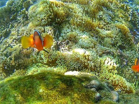 Karang di Gili Gede Lombok